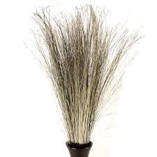 Tall Decorative Grass Decorative Dried Grasses Dune Grass