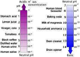 chemistry ii water and organic molecules