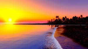 nature preview wallpaper beach tropics sea sand palm trees sunset