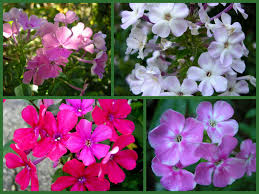 35 Plants That Repel MosquitoesClimbing Plants That Like Shade