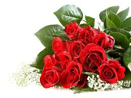 roses beautiful red roses wallpapers hd widescreen wallpapers desktop background