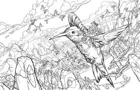 Small Picture Hummingbird Coloring Pages 3658 1200776 Free Coloring KIDS Area