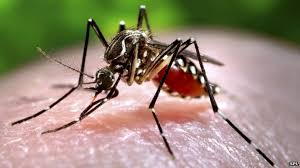 Ultrasound <b>mosquito</b> repellents: Zapping the myth - BBC News