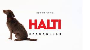 Halti Dog Headcollar Fitting
