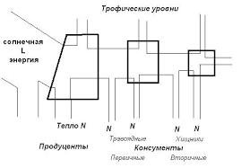 Реферат Понятие экосистемы сукцессии и ее видов Экологическую систему можно представить в виде диаграммы потока энергии рис 3