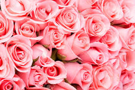 pink rose flower bouquet background stock photo 39501756