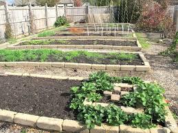 Small Picture Backyard Vegetable Garden Design Ideas Veggie Fantastic For Home