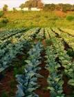 גרים באזור המרכז? תכירו החווה האורגנית שעושה משלוחים של פירות וירקות אורגניים עד לפתח ביתכם