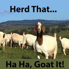 Goat Quotes Extraordinary Funny Goat Quotes Pun Quotes