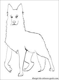 Disegno Di Pastore Svizzero Bianco Da Colorare Disegni Da Colorare