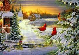 winter cardinal wallpaper. Exellent Winter Winter Cardinals For Cardinal Wallpaper