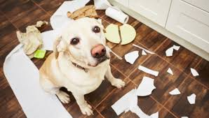 before we get started on the best dog toys for tough chewing dogs we want to go through toys that you should avoid giving to your dog