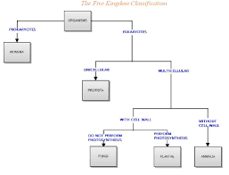 Kingdoms Of Biology Chart With The Help Of Flow Chart Depict Five Kingdoms Classification