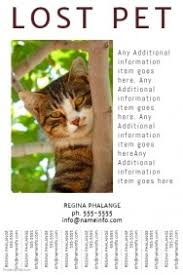 Missing Cat Poster Template 860 Customizable Design Templates For Lost Animal Postermywall