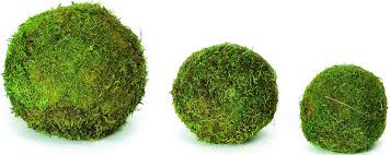 Decorative Moss Balls Dried Moss Balls Preserved 1001100 inch diameter 2