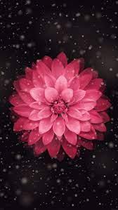 Cute iPhone Flower Wallpapers - Top ...