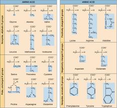 Mcat Amino Acid Chart 69 Studious Aminoacid Chart