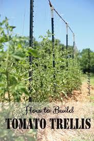 Diy tomato cage Wire Diy Tomato Trellis Balcony Garden Web 18 Diy Tomato Cage And Stake Ideas Balcony Garden Web