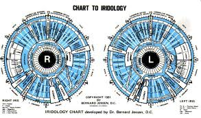 Bernard Jensen Iridology Chart Pdf Chart To Iridology 12pc Free For You Iriscope Iridology