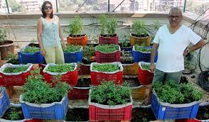 mumbai residents convert terrace into