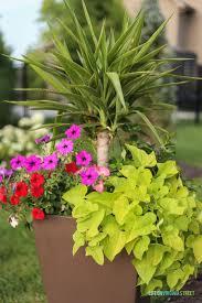 summer planter ideas life on virginia