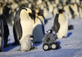 baby penguins. Interesting Penguins Penguin U201c For Baby Penguins N