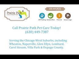 Glen Ellyn Dog Walker Service Pet Sitters Dog Walking Pet Care