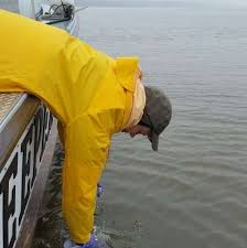 Fish Medication Chart Researchers Map High Levels Of Drugs In The Hudson River