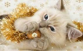 Christmas Kitten Desktop Wallpaper ...