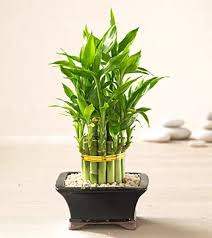 feng shui plant office. Not Only Are Plants Gorgeous To Look At, They Can Also Assist In Creating A Positive Flow Of Energy The Home Or Office. Will This Blog Help You Feng Shui Plant Office E
