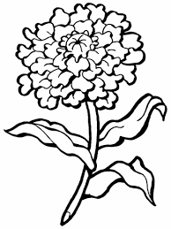Small Picture Carnation Flower coloring page Free Printable Coloring Pages
