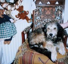 「ももさえずり 犬の物語 小林古径」の画像検索結果