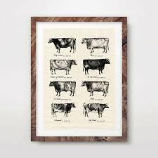 Cattle Chart Vintage Cow Breeds Farm Animal Chart Art Print Agriculture
