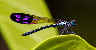 Image result for dragonfly just born