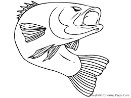 bass fish coloring pages. Fine Coloring Bass Fish Realistic Coloring Pages Throughout I