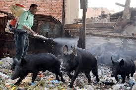 Egypt reports 16 swine flu deaths - Los ...