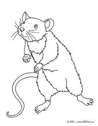 Small Picture Rat Mandala Black and White coloring page Rats