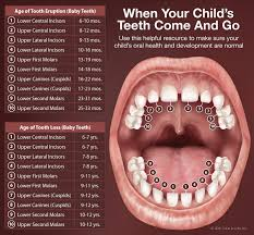Teething Chart For Babies Teething Pediatric Adolescent Dentistry Of The Main Line Bryn