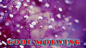 Good Morning Flowers Photo Wallpaper ...