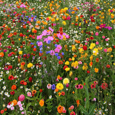 why annuals are a must have for your garden posted on march 27 2016 by vermont wildflower farm