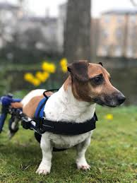 1132 best walkin wheels wheelchair images on dogs wheelchairs