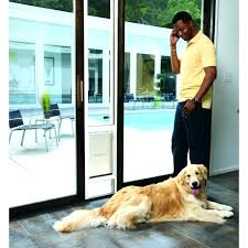 electronic dog door for sliding glass power pet large size of patio doors cat review