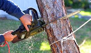 Image result for Emergency Tree Removal Sutherland Shire