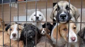 Hayvanları Koruma Kanunu teklifi Meclis'e sunuldu! Eşya olmaktan çıkarılıp,  canlı statüsüne getirilecekler - Haberler