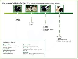 Pug Dog Vaccination Chart Distemper Vaccine Schedule Examples And Forms