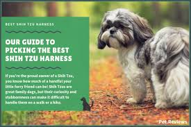 10 Best Harnesses For Shih Tzus Our Walking Hiking No