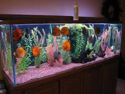 Fish Tank Accessories And Decorations Decorations Discus Fish Tank Fish Tank Decor Ideas Glass 57