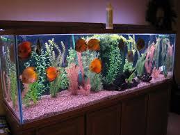 fish tank lighting ideas. Decorations:Discus Fish Tank Decor Ideas Lighting G