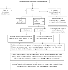 A Flow Chart Showing The Spread Of Antibiotic Resistance In