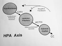 Biochemistry Hypothalamic Pituitary Adrenal Axis The Stress